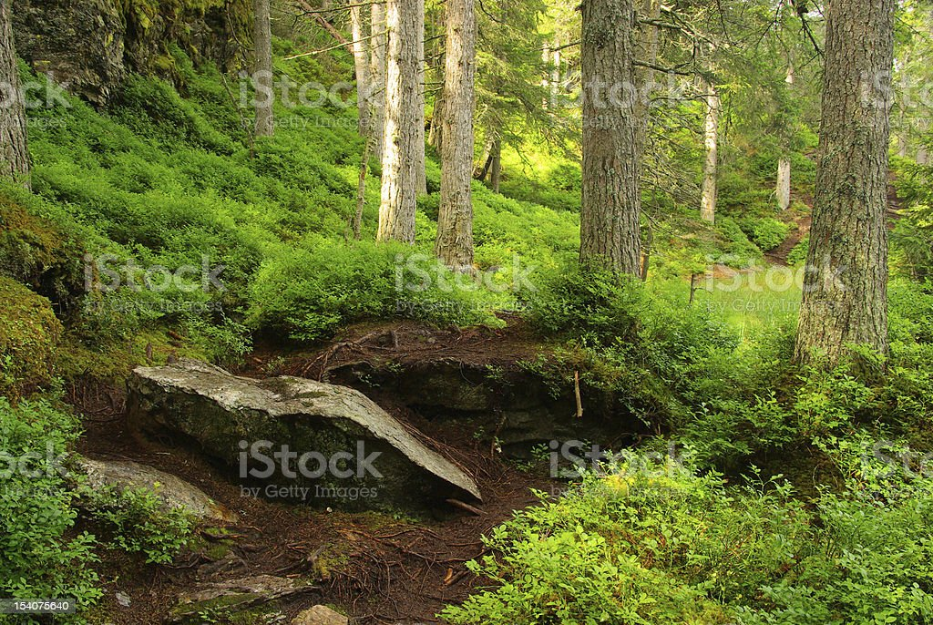 Piller Swamp stock photo