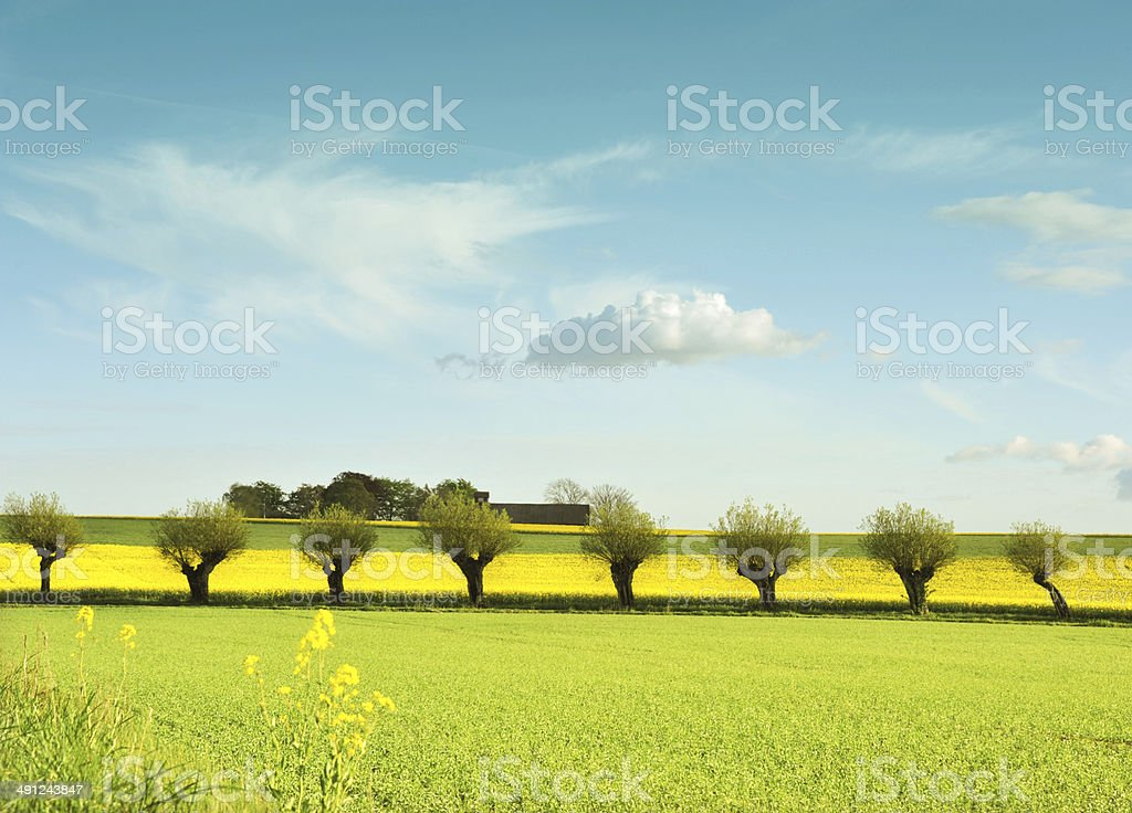 Pillow tree in row stock photo