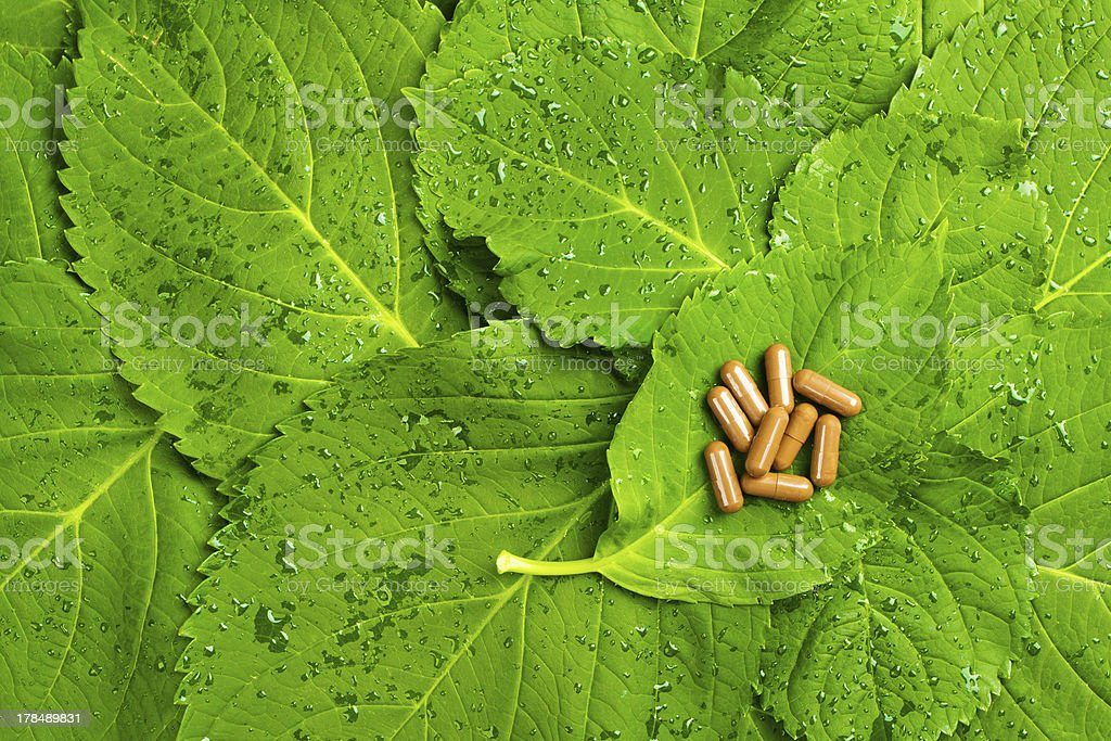 Pills over green leaves. Homeopatic medicine royalty-free stock photo