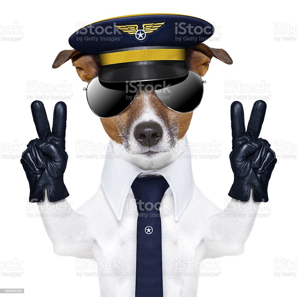 pilot dog royalty-free stock photo