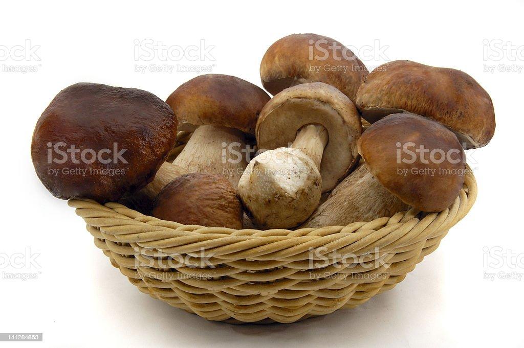 Pilze stock photo