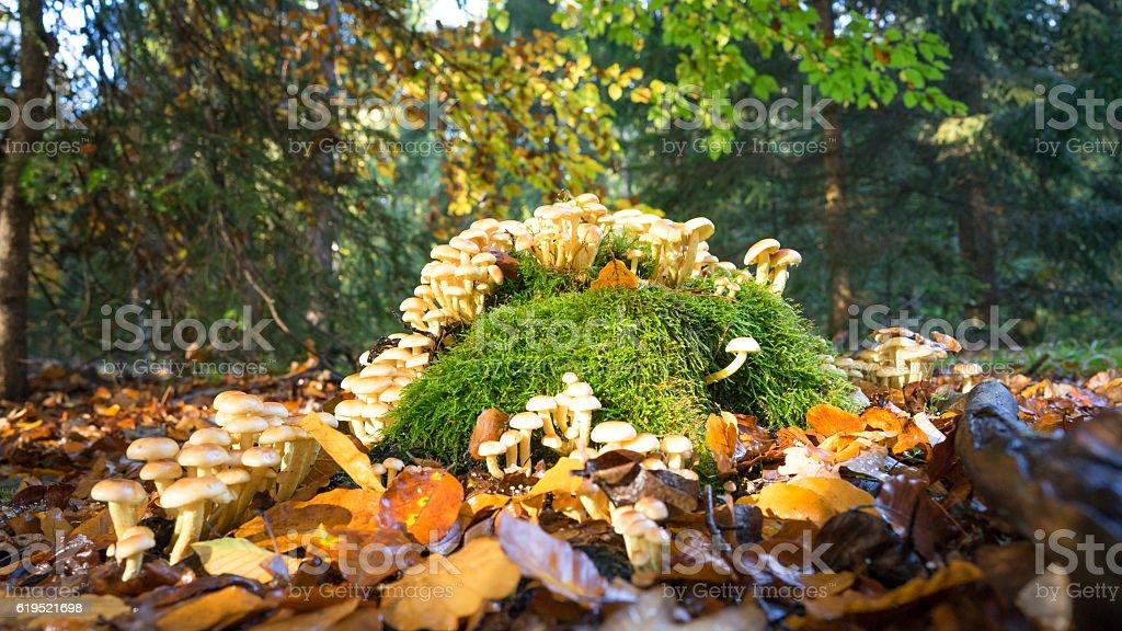 Pilzschwemme stock photo