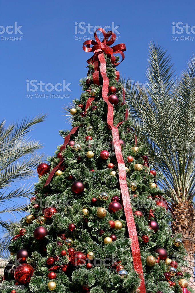 Pine and Palm Christmas Trees royalty-free stock photo