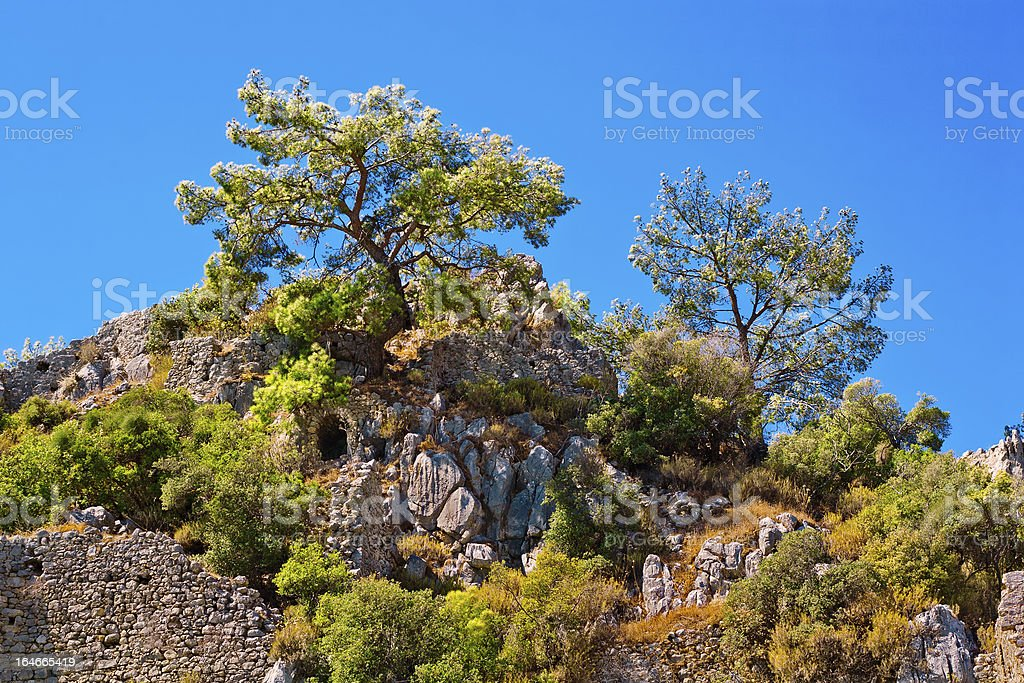 pine and ruins royalty-free stock photo