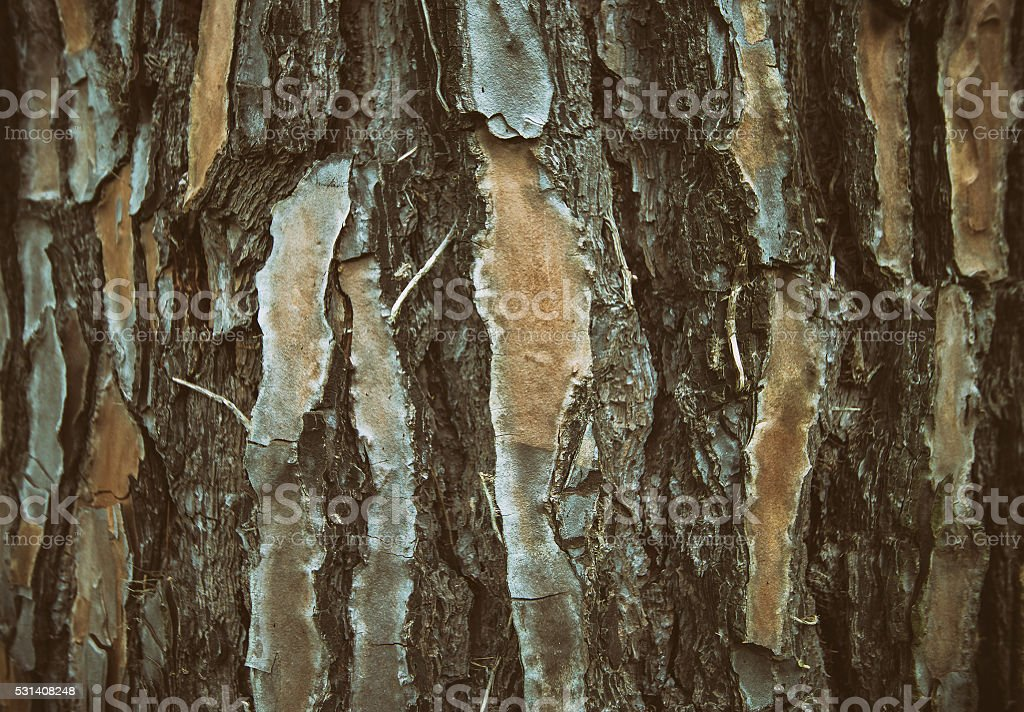 Pine Bark. Abstract nature background stock photo