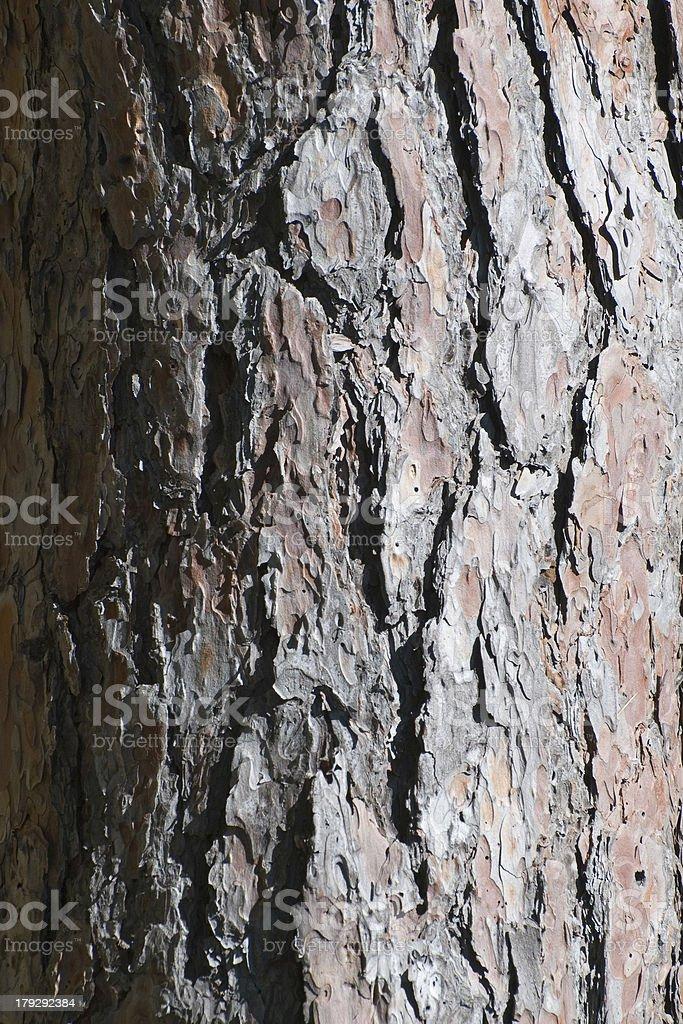 Pine Bark Background royalty-free stock photo