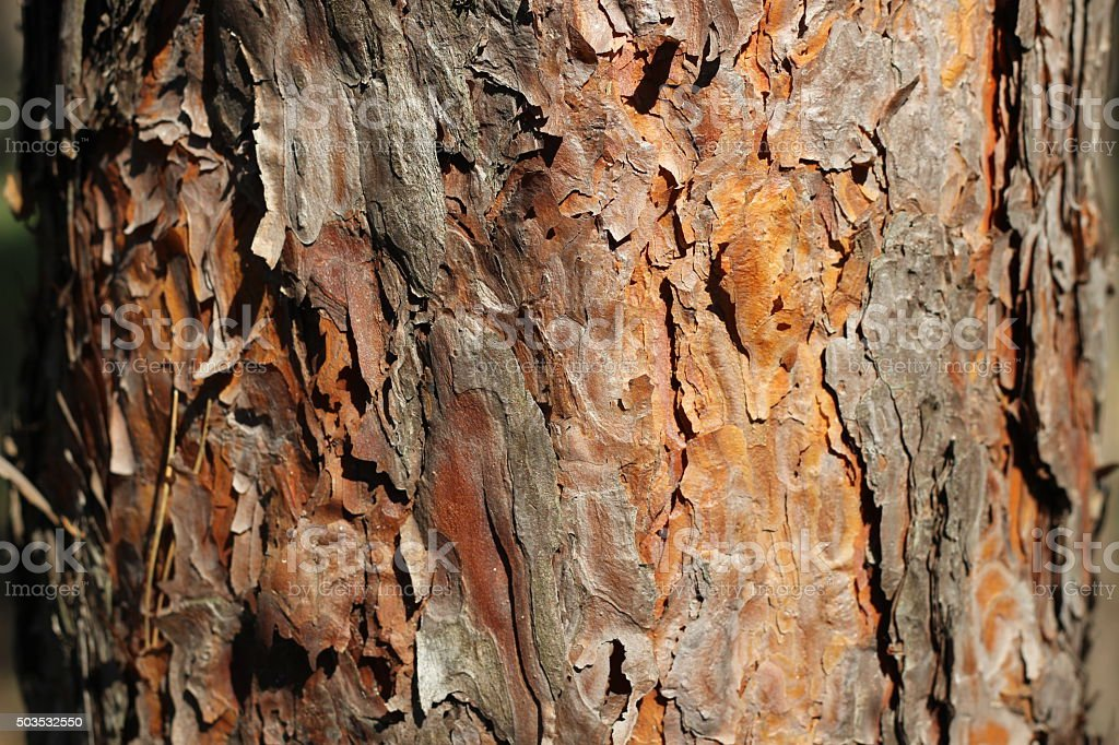 Pine bark close stock photo