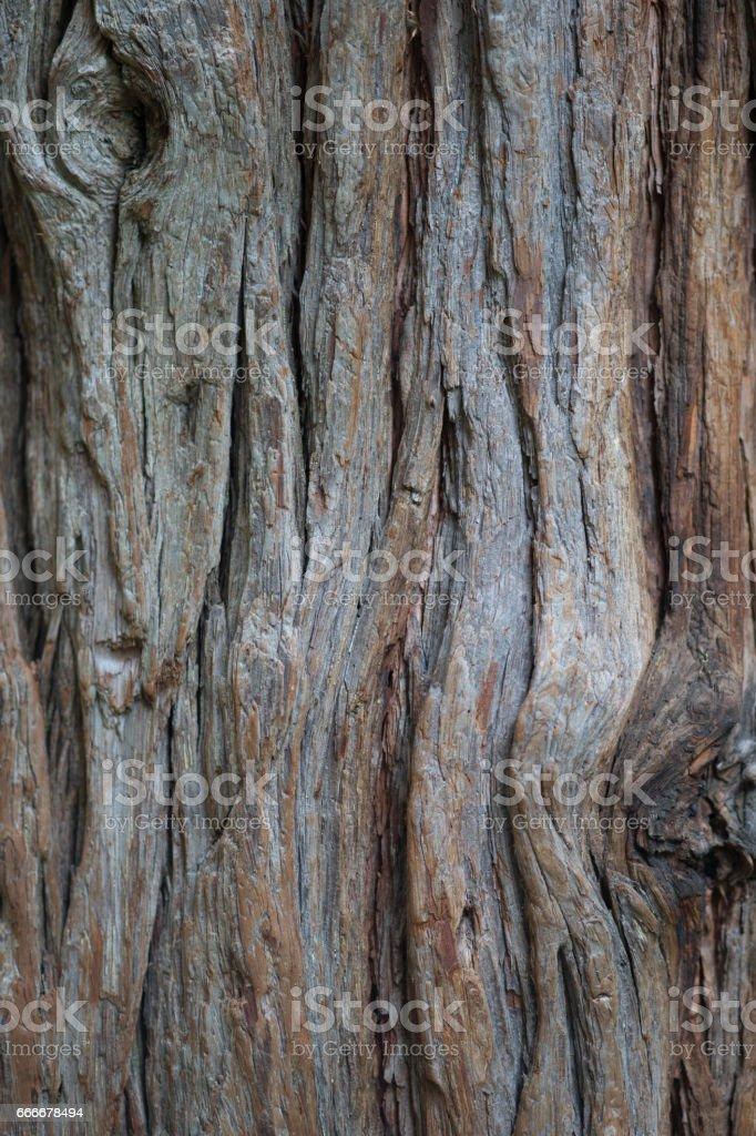 Pine bark stock photo