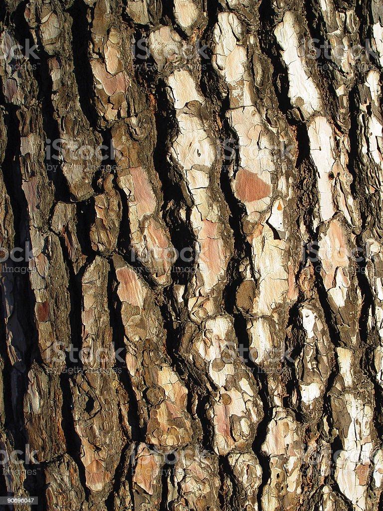Pine bark royalty-free stock photo