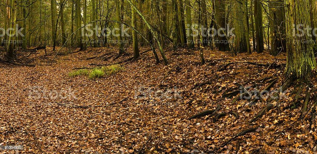 Pine Barrens Hollow stock photo