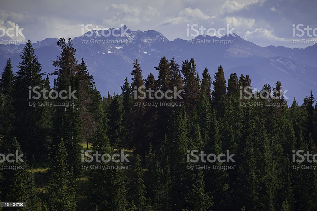 Pine Beetle Kill of Lodgepole Pines and Mountains Colorado stock photo