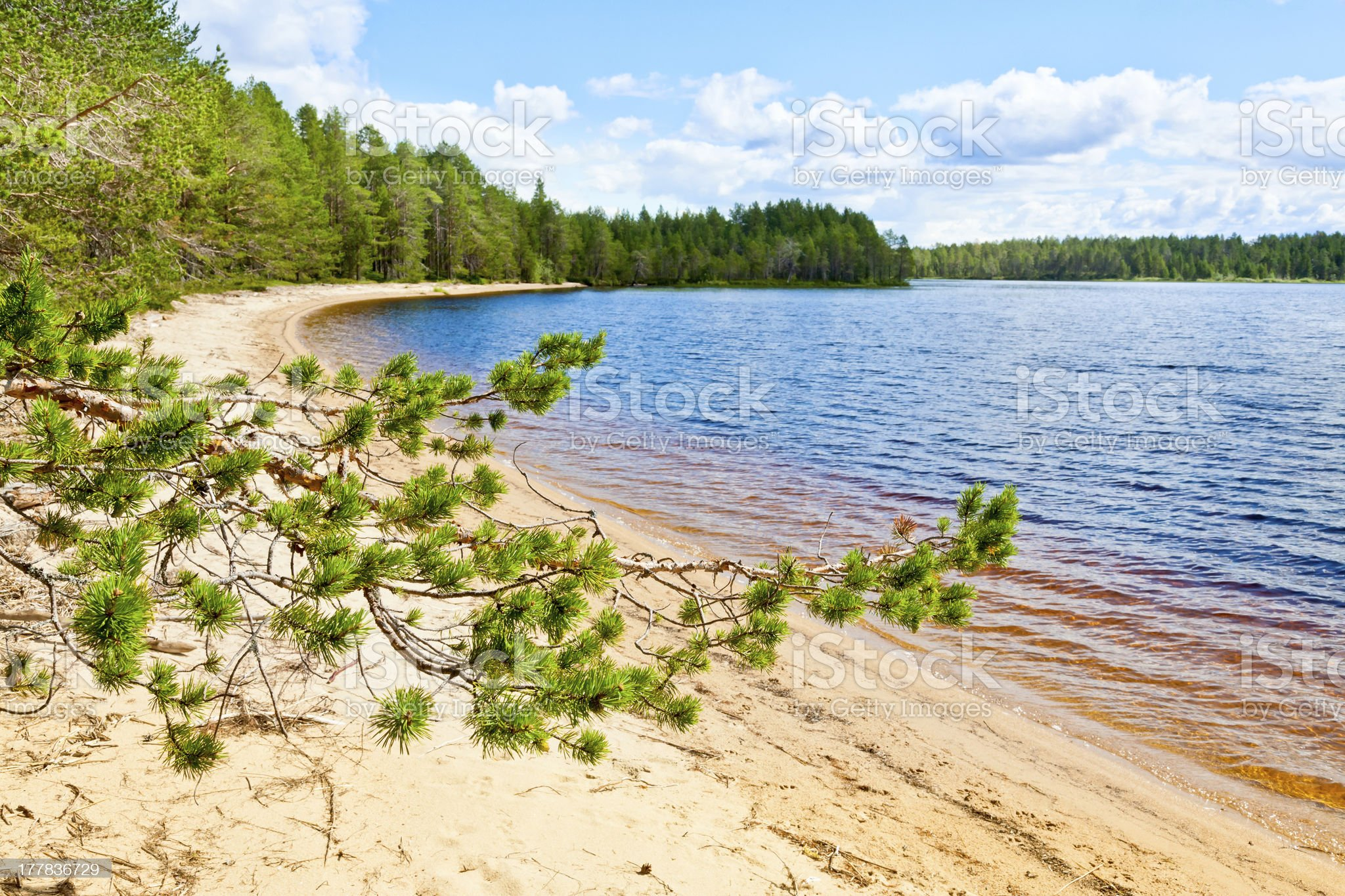 Pine branch against forest lake royalty-free stock photo