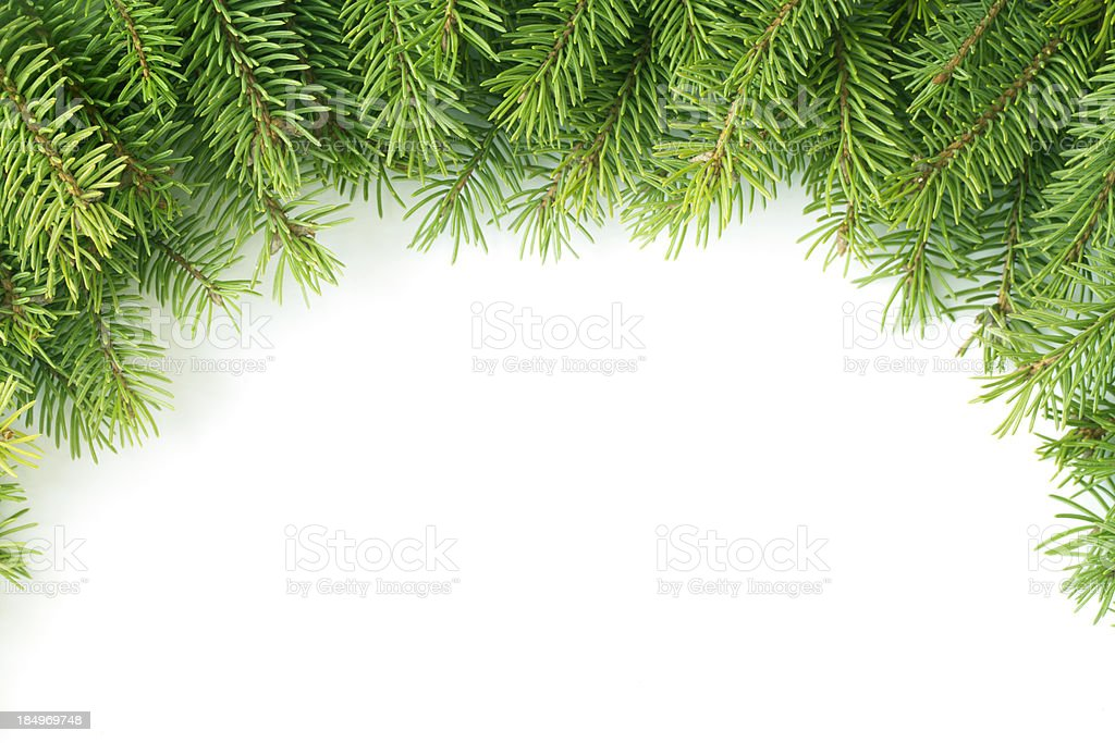 Pine branch royalty-free stock photo