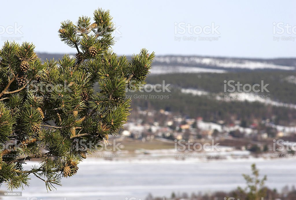 Pine branch with a view stock photo