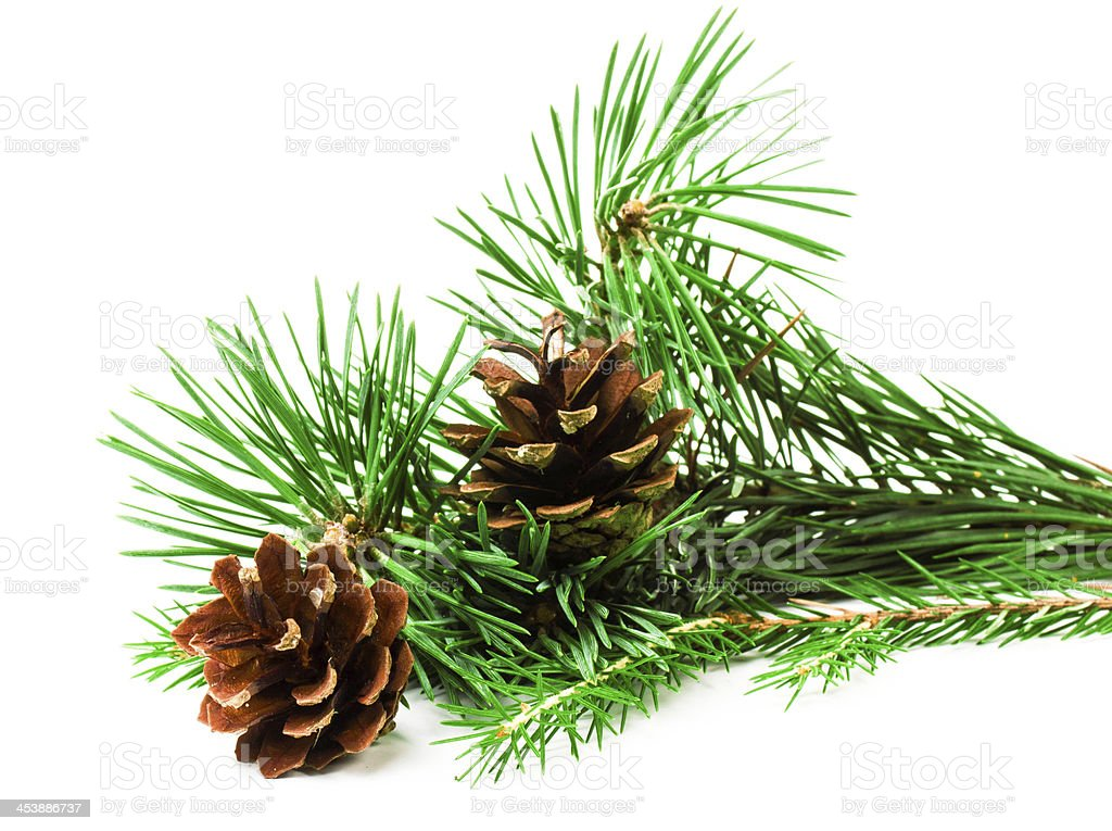 Pine branches with Christmas ornaments on white background royalty-free stock photo