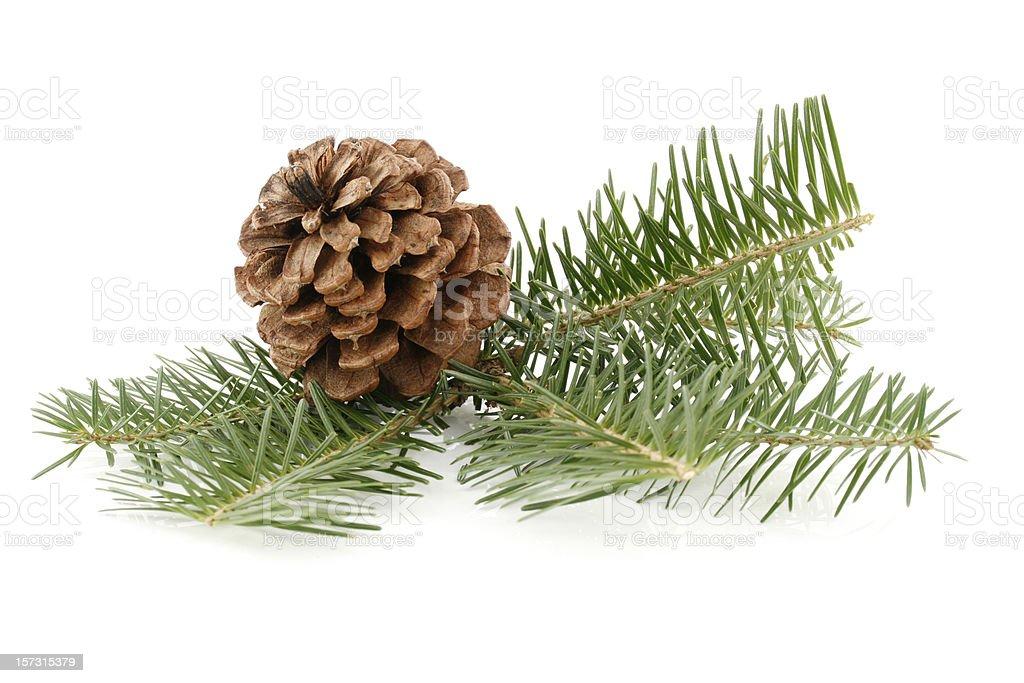 Pine Cone & Needles stock photo