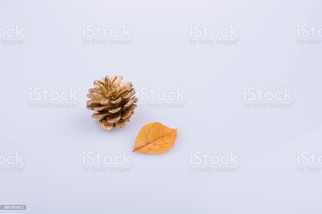 Pine cone and a leaf on a white background stock photo