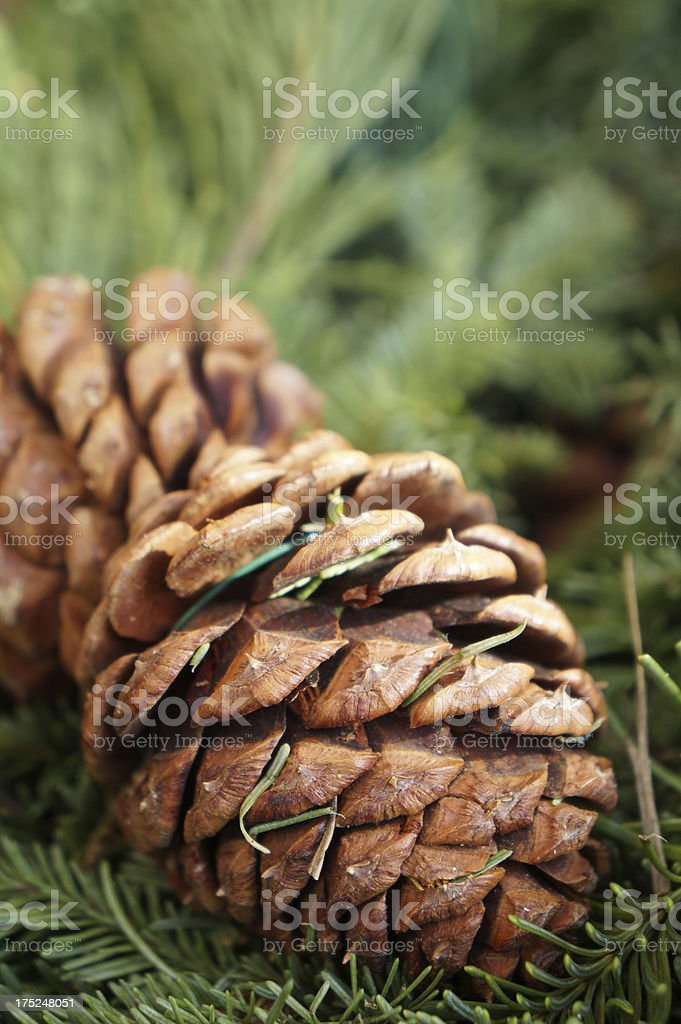 Pine Cone and Needles royalty-free stock photo