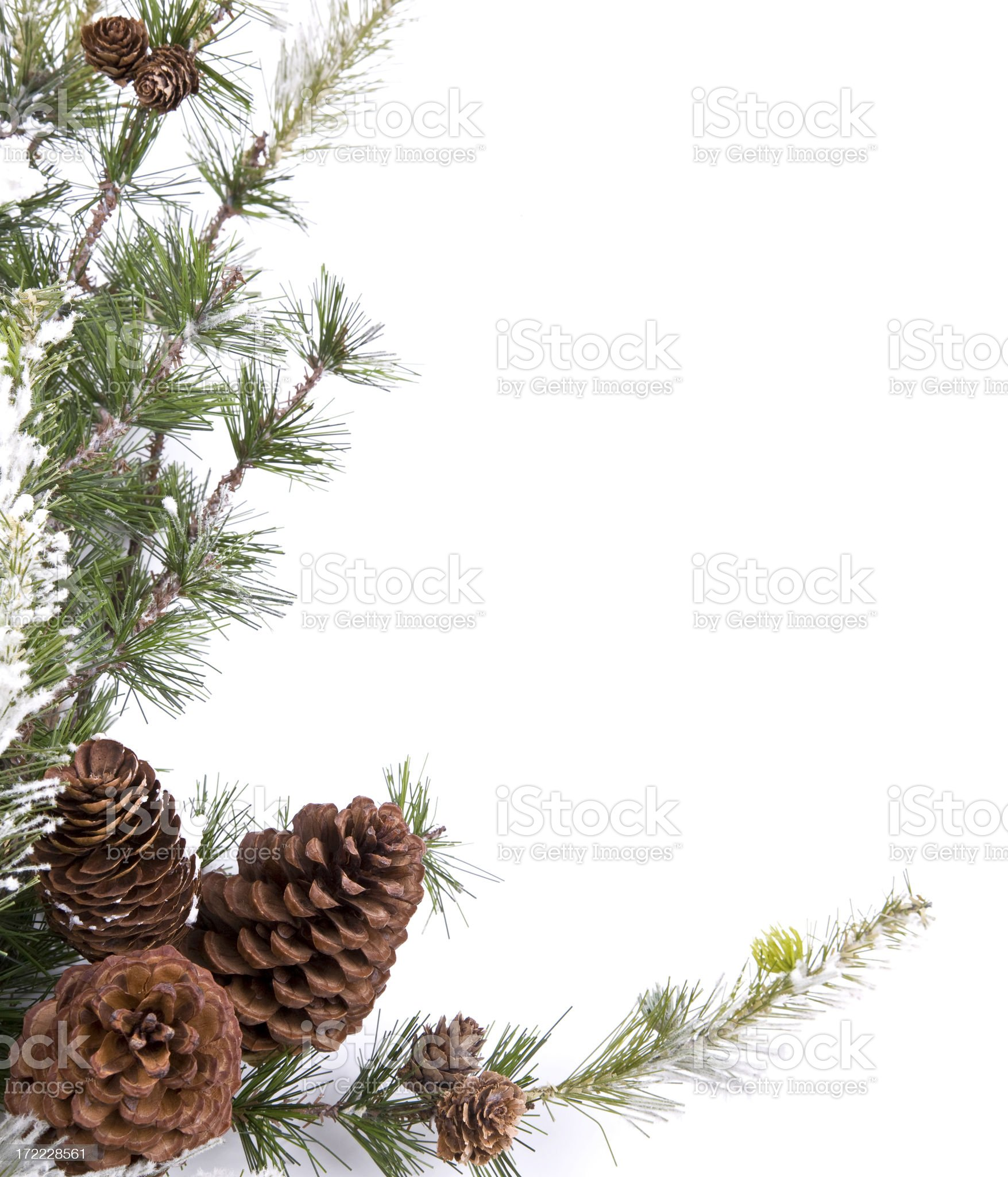 Pine Cone Border XL royalty-free stock photo
