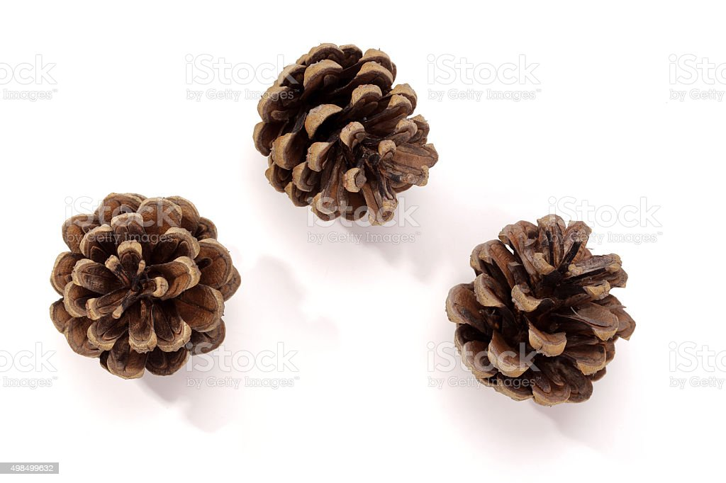 Pine Cone. Christmas Decorations stock photo