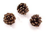 Pine Cone. Christmas Decorations