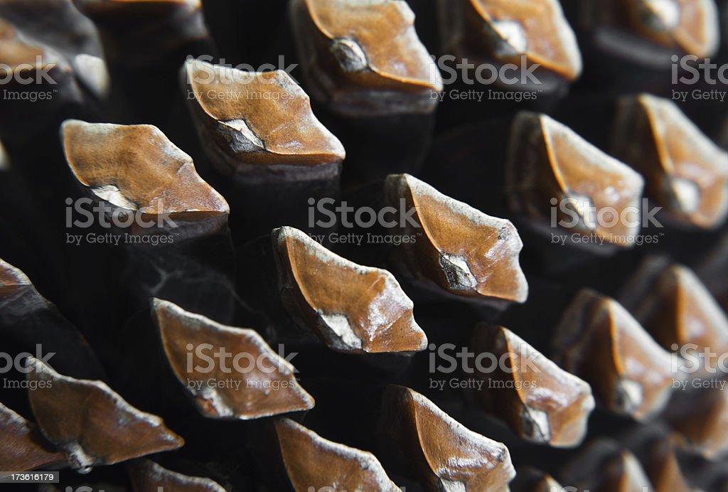 Pine cone closeup stock photo