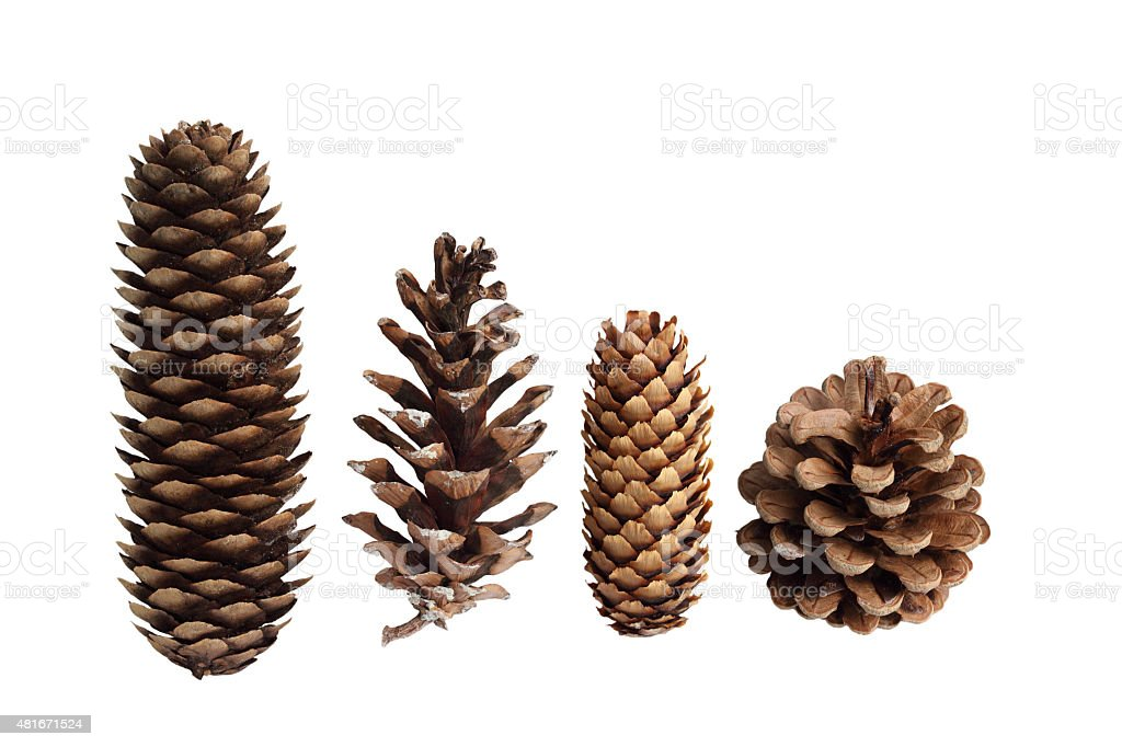 Pine Cone Collection stock photo