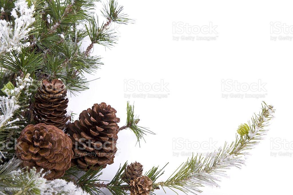 Pine Cone Garland XL stock photo