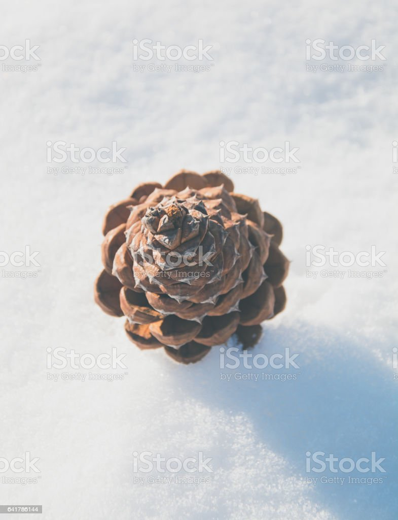 pine cone in the snow stock photo