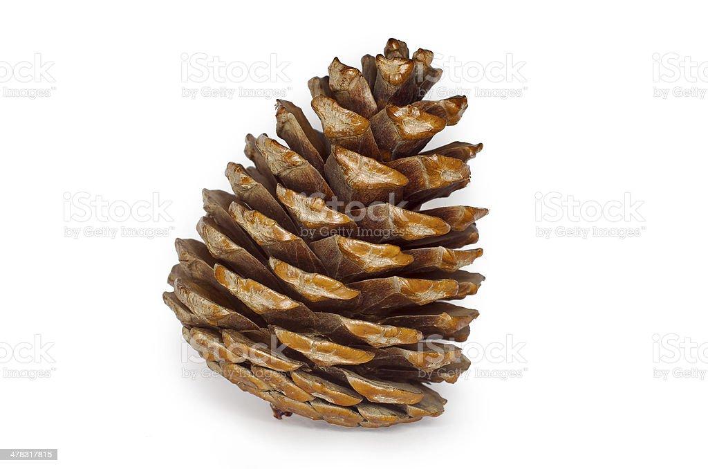 Pine Cone Isolated stock photo