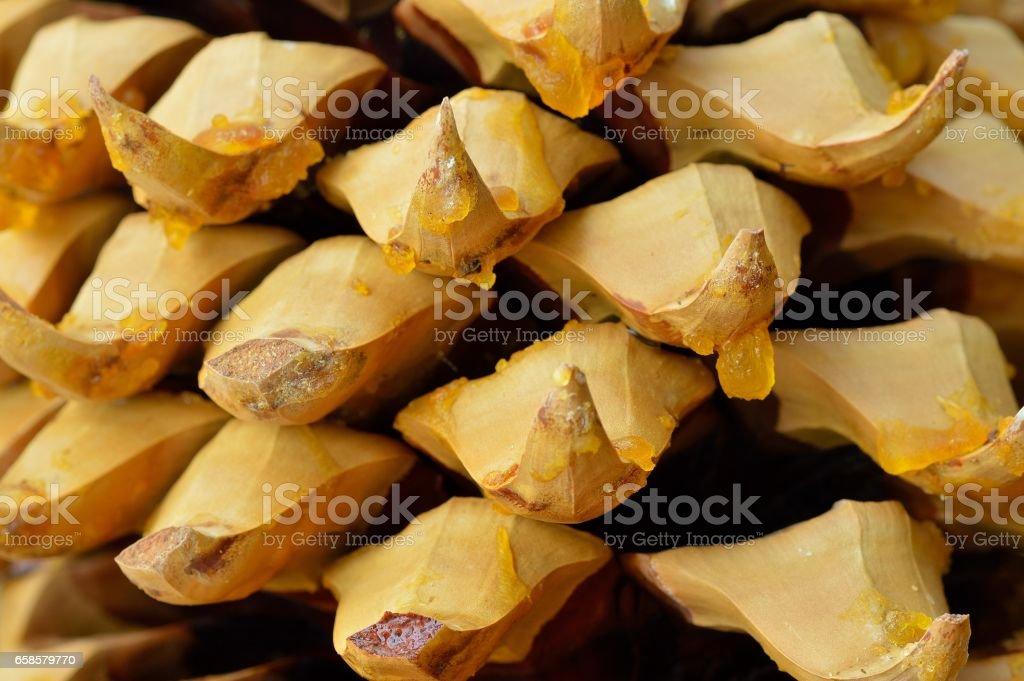 Pine cone Macro stock photo