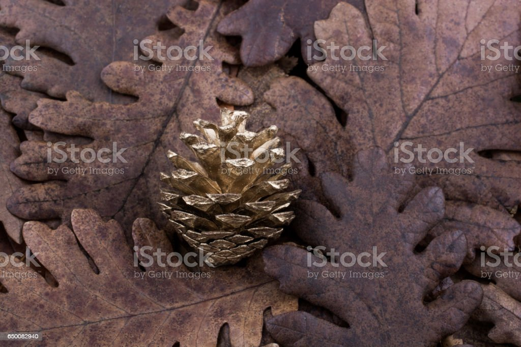 Pine cone on a background covered with dry leaves stock photo