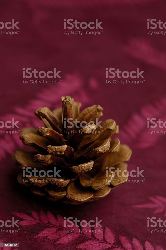 Pine Cone on Red royalty-free stock photo