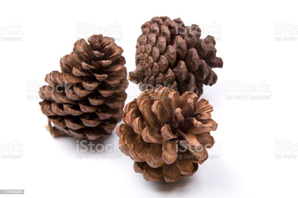 Pine Cone royalty-free stock photo