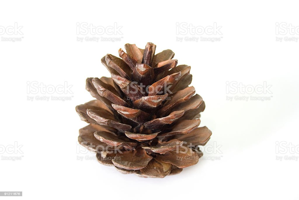 Pine cone royalty-free stock photo