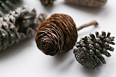 Pine cone set different views on white