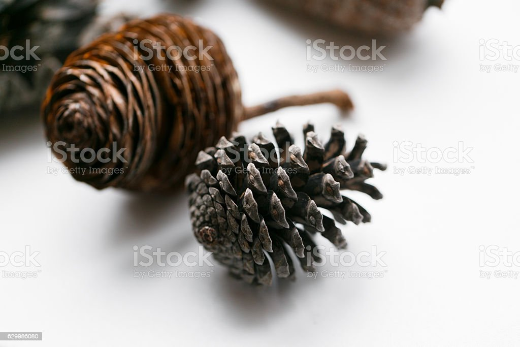Pine cone set different views on white stock photo