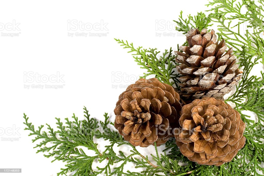 pine cones and greenery royalty-free stock photo