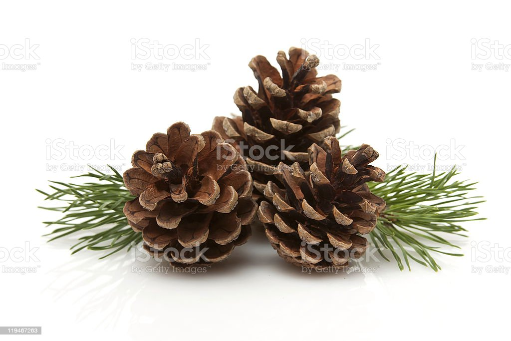 Pine Cones and Needles stock photo