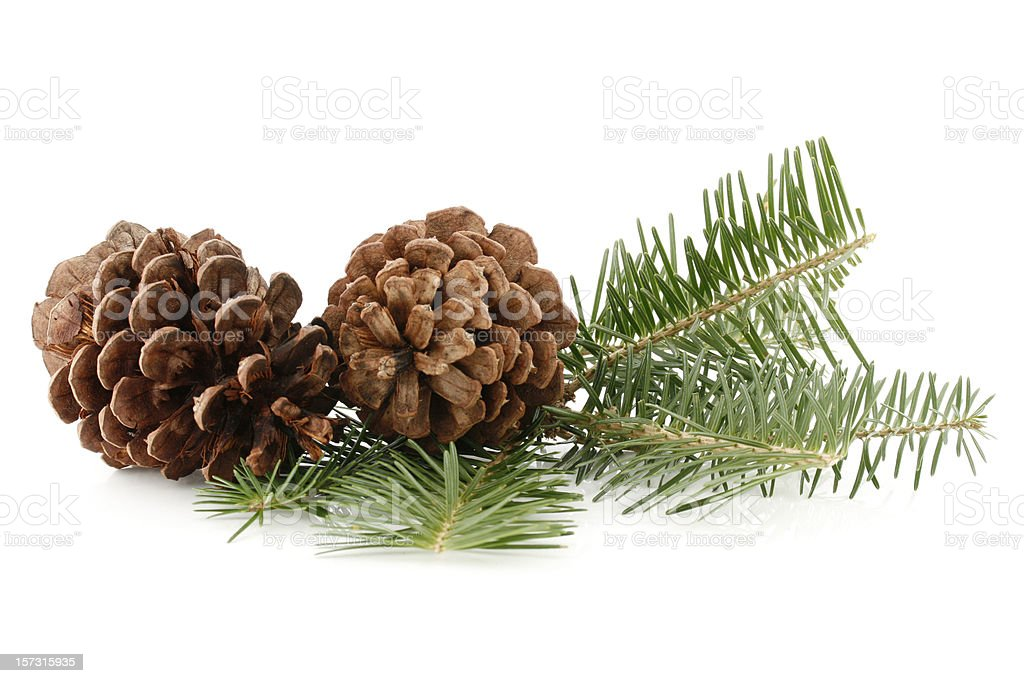 Pine Cones and Needles royalty-free stock photo