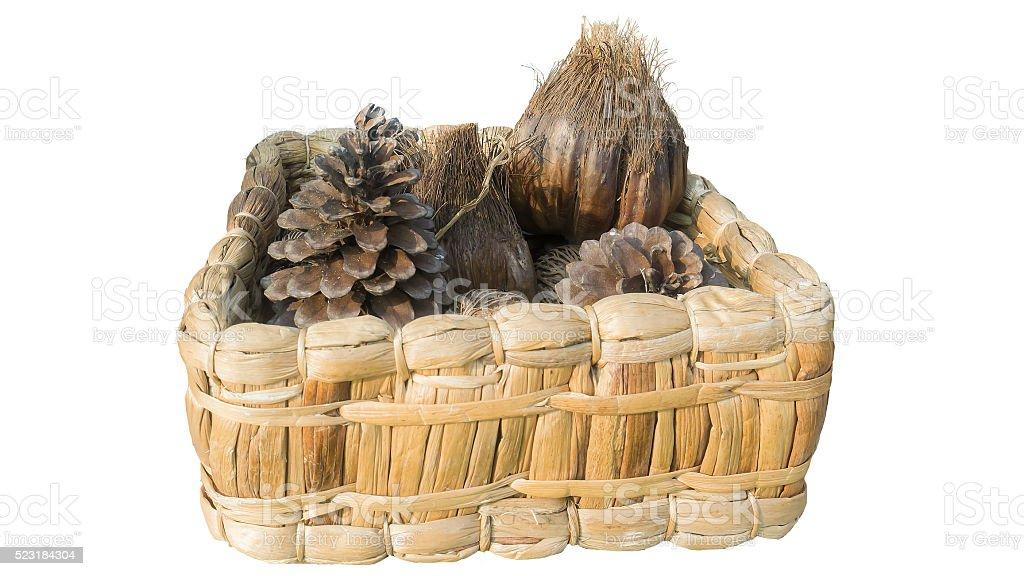 pine cones and pine cones stock photo