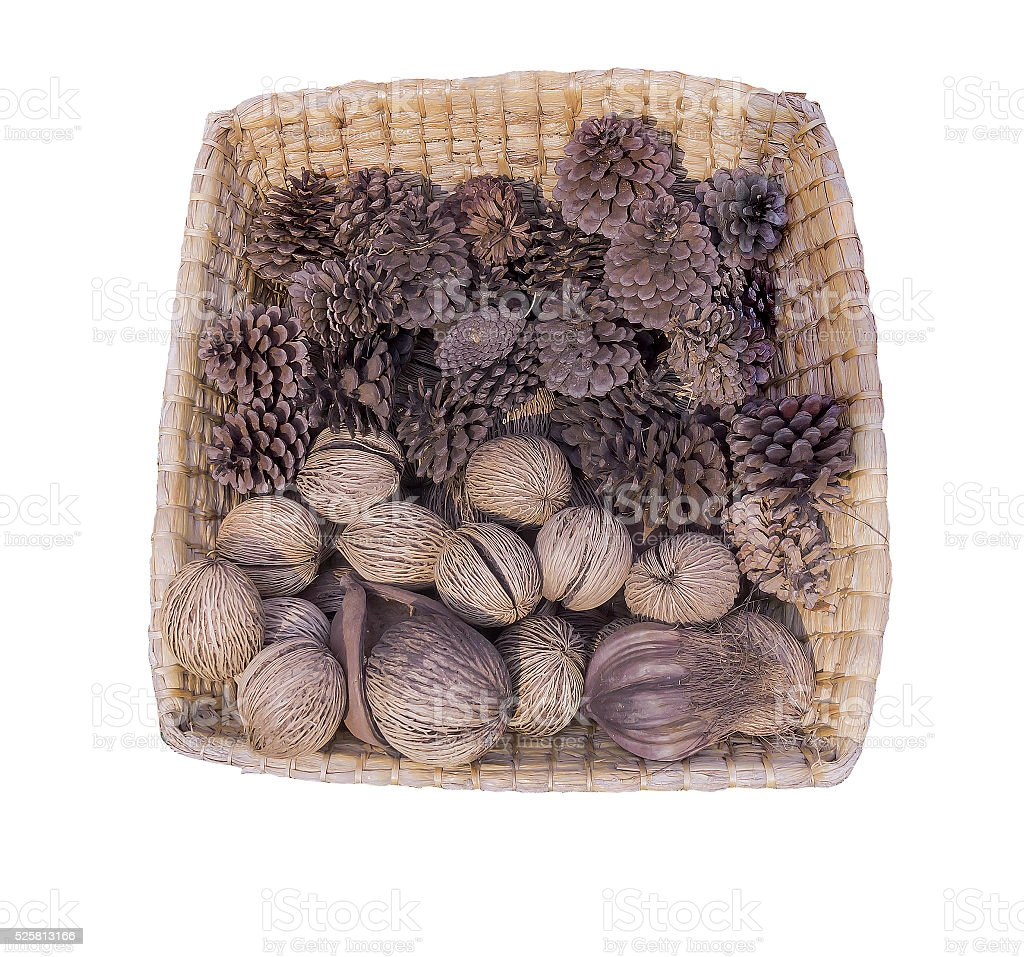 pine cones and walnuts stock photo