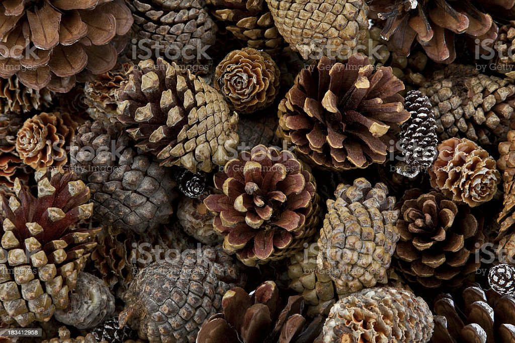 Pine Cones Galore stock photo