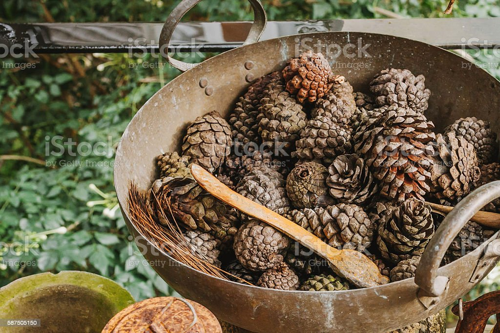 Pine cones in a rusty iron pan Ideas to decorate stock photo