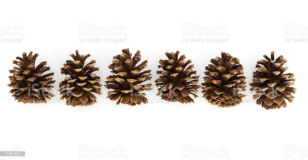 Pine Cones in Row stock photo