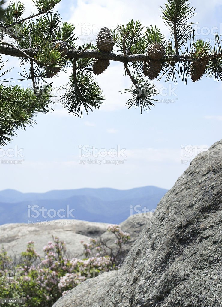 Pine Cones in the Mountains stock photo
