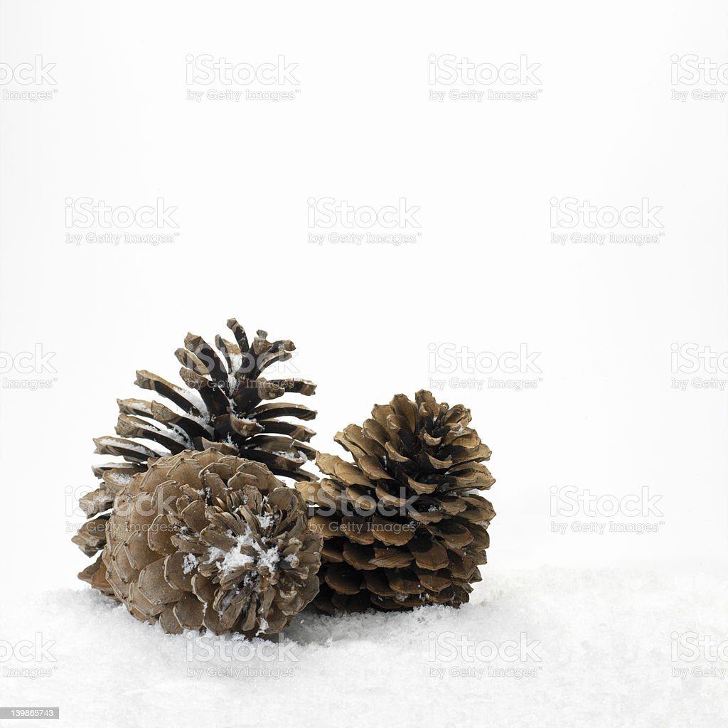Pine cones in the snow royalty-free stock photo