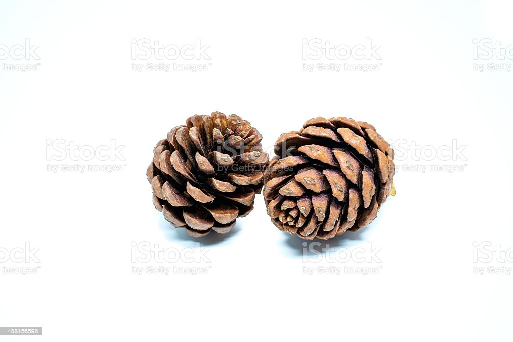 Pine cones isolated on a white background stock photo