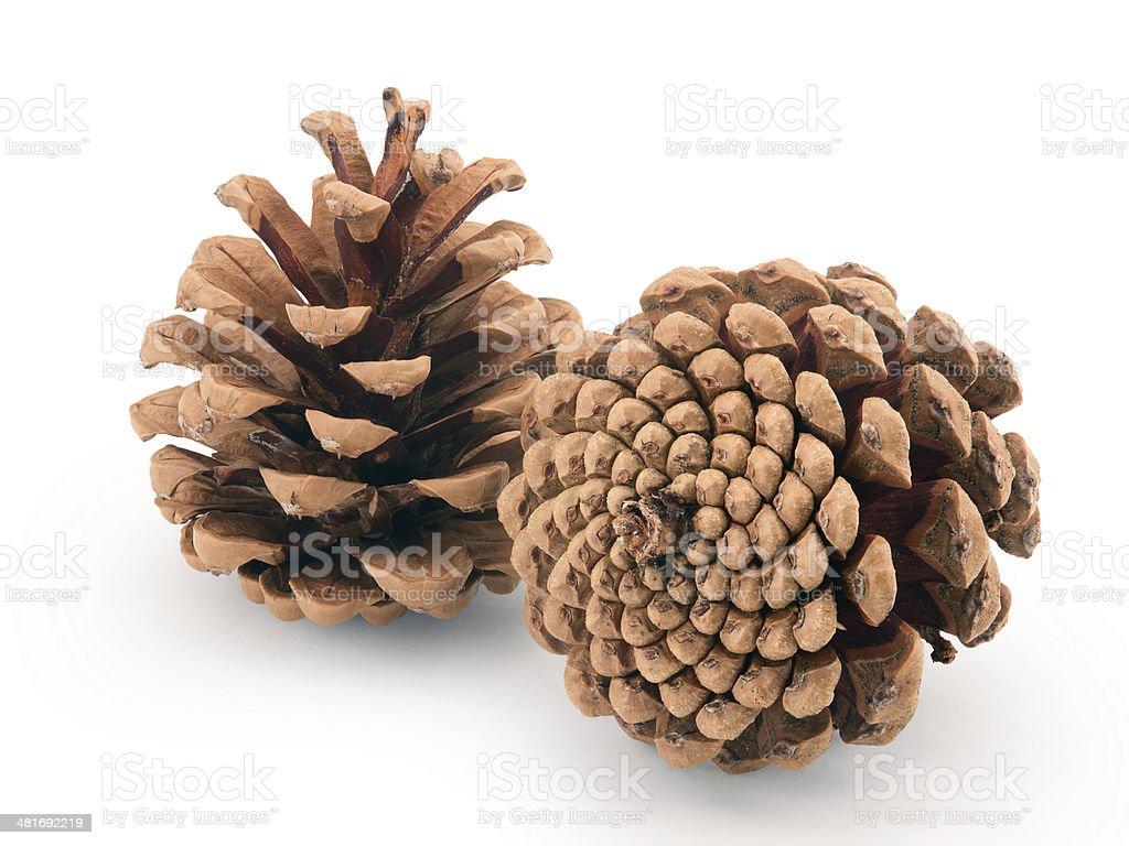 pine cones isolated stock photo