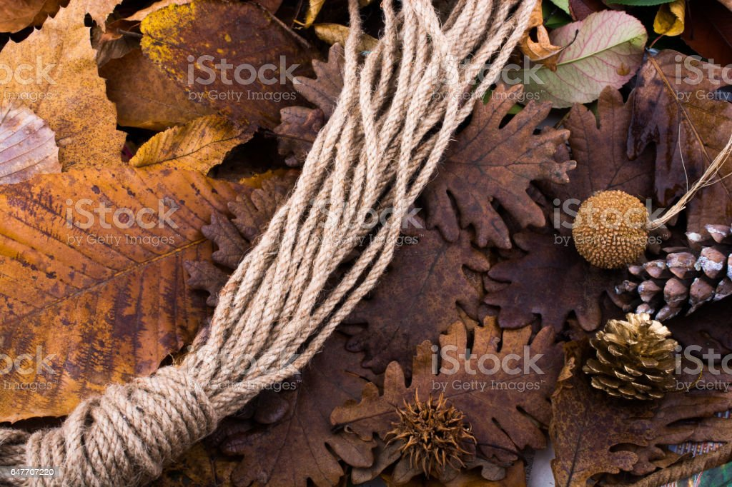 Pine cones on a background covered with dry leaves stock photo